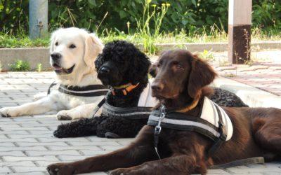 Michaela Drozdová: Detekční pes u diabetika cítí výkyv glykemie až 30 minut dopředu